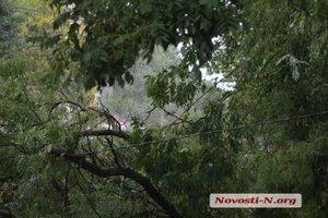 На Николаев обрушился ливень – упала электроопора