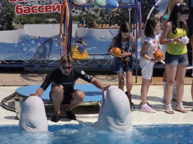 Дельфины определили номера